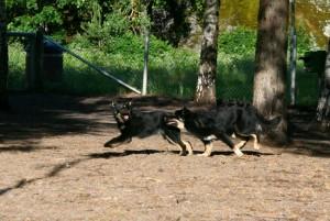 Viiti_Viuhti_koirapuisto